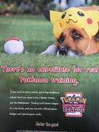 advertisement animal dog flyer pokeball tcg tcg_league trading_card_game wizards_of_the_coast wotc // 720x960 // 77.7KB